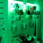 Retail displays come alive with LEDs!
