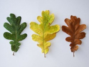 Every leaf is different