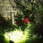 LEDs create a pool of light in garden border