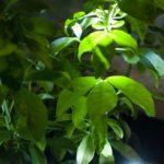 LEDs can make your plants look striking at night