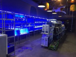 JAWS Aquatics display tanks with cool white (blue-tint) LED lights